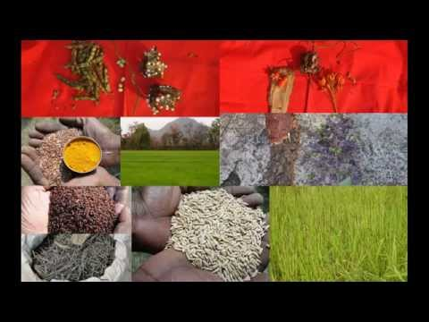 Tribal Medicines of Gandhamardan Hills for Ureteral calculi: Film by Pankaj Oudhia