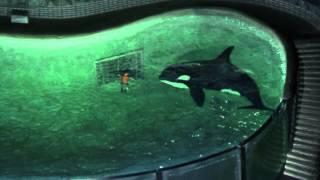 getlinkyoutube.com-My Orca