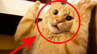 Funny Cats Compilation [Most See] Funny Cat Videos Ever Part 2