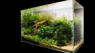 getlinkyoutube.com-Escarpment Nature Aquarium by James Findley - Step by Step