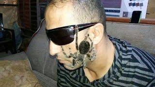 getlinkyoutube.com-قررت احمل العنكبوت الترنتولا على وجهي مع جمال العمواسي