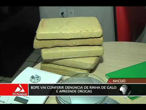 BOPE VAI CONFERIR DENUNCIA DE RINHA DE GALO E APREENDE DROGAS
