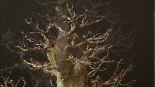 "getlinkyoutube.com-Carpinus orientalis ""MRCL"" - Winter session"