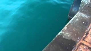 getlinkyoutube.com-ダイソー100円ジグの泳ぎ、結構使えます。