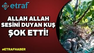 'Allah Allah' dedikçe havaya sıçradı!