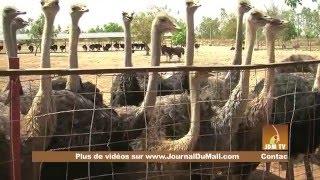 Visite guidée de la Ferme agricole KLEDU