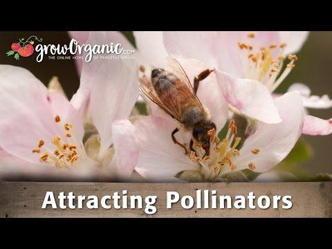 Attracting Pollinators to Your Garden