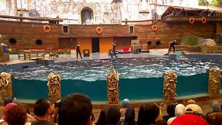 Atraksi Dolphins and Friends, Taman Safari Prigen, Taman Safari Indonesia 2 (Animal Full HD)