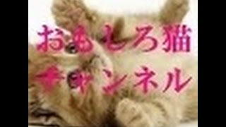 getlinkyoutube.com-【おもしろ猫】 とことん掘り下げ隊 今どき猫の気持ち30連発でみたド派手Ⅴ系煉君と虎徹の愛情物語