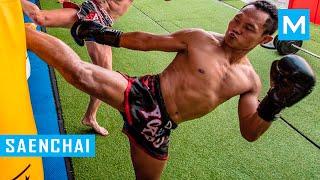 Saenchai Muay Thai Training 2016 | Muscle Madness