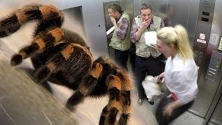 getlinkyoutube.com-Elevator Spider Prank - S1 E02 - iPad Magic with Simon Pierro