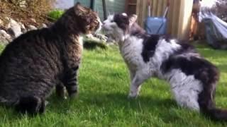 getlinkyoutube.com-Unbelievable Cat Fight HD 1080P