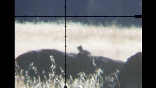 getlinkyoutube.com-156 Yard Shot! .25 cal Air Gun Hunting - Benjamin Marauder vs Hatsan BT65 Elite