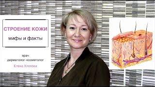 getlinkyoutube.com-Строение кожи, мифы и факты. Косметолог Елена Хлопова.