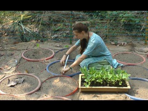 Compost Tea vs E.M. vs Biochar #2 - Starting the Trial, Planting & Applying the Treatments!