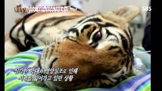 getlinkyoutube.com-TV동물농장 130811 다시보기 #1(8)