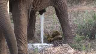 getlinkyoutube.com-Africa - Tanzania Safari - Tag 2 - Tarangire und Lake Manyara