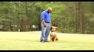 getlinkyoutube.com-Protection Dog/Obedience Demonstration