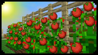 getlinkyoutube.com-✔ Minecraft: How to make Tomato Plants