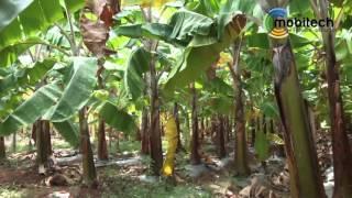 getlinkyoutube.com-Irrigation Automation-Drip irrigation valve controller-Kannada
