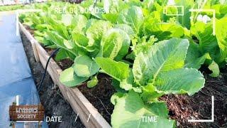 getlinkyoutube.com-เกษตร Society 8/2/58 : เทคนิคการปลูกสวนผัก