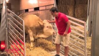 getlinkyoutube.com-Radost bika Bandita, ko se osvobodi verige