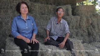 """getlinkyoutube.com-เศรษฐีเกษตร 31/5/58 : วิธีการปลูก """"หญ้าแพงโกล่า"""" ให้เป็นเศรษฐี"""