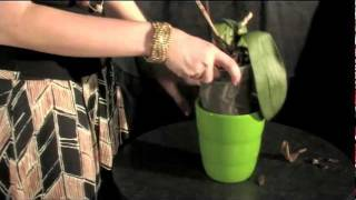 getlinkyoutube.com-Watering Your Just Add Ice ORCHIDS with Ice