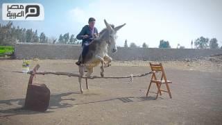 "getlinkyoutube.com-مصر العربية | حمارة ""بلقاس "" تنافس الخيول العربية"