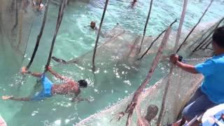 getlinkyoutube.com-Pelepasan ikan duyung di pulau kokoya pulau morotai