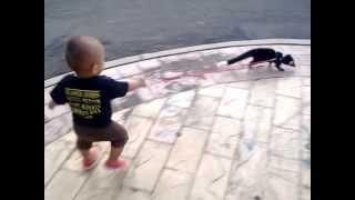 getlinkyoutube.com-Baby Civet Musang Bulan dan Abie
