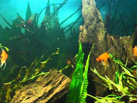 15 Min Relaxing Aquarium Video HQ Screen Saver