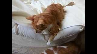getlinkyoutube.com-脳障害で頭を揺らす猫の桃之助 がんばれ