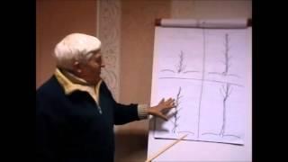 getlinkyoutube.com-Формирование кроны дерева грецкого ореха