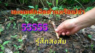 getlinkyoutube.com-วิธีทำแร้วหรือแฮ้วตอดสำหรับไก่ป่าโดยเฉพาะ
