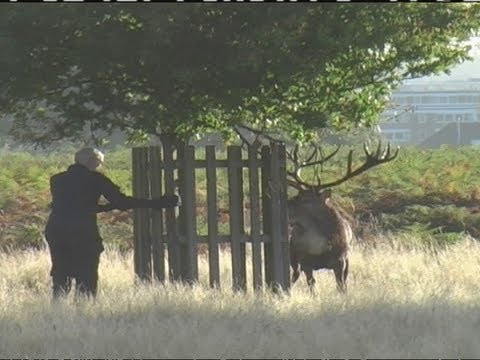 Testosterone fuelled stag chases man in Bushy Park, London
