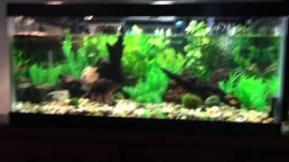 getlinkyoutube.com-Turtle and Fish tank