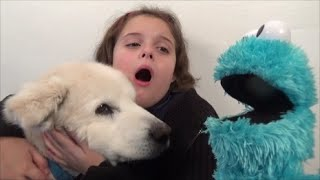 getlinkyoutube.com-Cookie Monster Attacks Girl Feeds Pet Dog Cookies