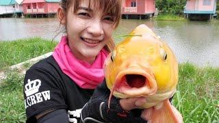 getlinkyoutube.com-Carp fishing ตกสปิ๋ว ปลาทอง by mayme