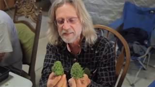 getlinkyoutube.com-Grow Cannabis – Cannabis Expeditions The Green Giants of California – by Jorge Cervantes