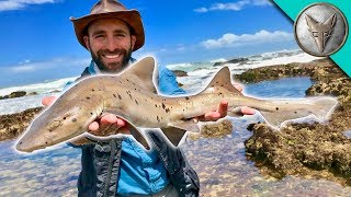 Catching a SHARK by HAND! width=
