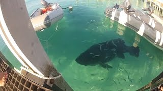 getlinkyoutube.com-Spearfishing and Freediving in Australia 2 | Awesome Footage and Big Fish