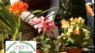getlinkyoutube.com-Bulbos de Primavera 1ª parte de 2