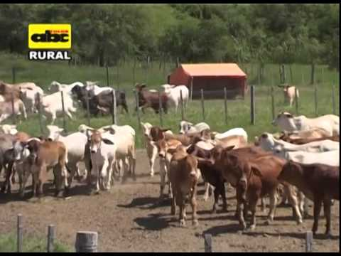 El Creep  Feeding en ganado de carne. Ventajas