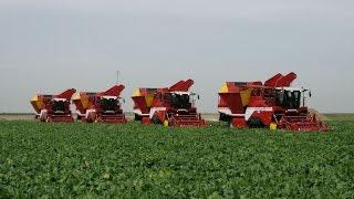 Grimme Beet Harvest XXL - 4x Grimme MAXTRON 620