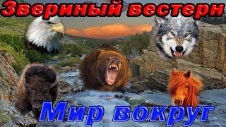 getlinkyoutube.com-Мир животных. Дикий запад. Звериный вестерн. Северная Америка.