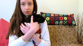 getlinkyoutube.com-How To: Handle Guinea Pigs The Correct Way