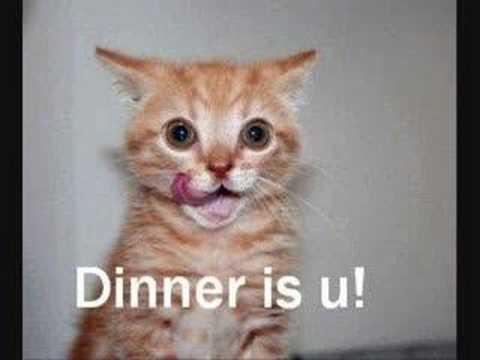 youtube funny cats. Very Funny Cats!