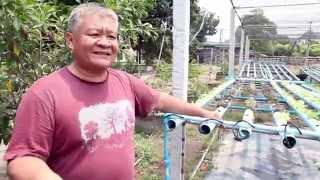 getlinkyoutube.com-ผักไฮโดรโปนิกส์-ผักปลอดสารพิษ ศิริมงคลฟาร์ม อ.บ้านนา จ.นครนายก