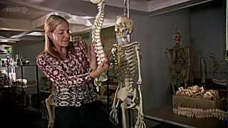 getlinkyoutube.com-BBC Origins of Us 1 of 3 - Bones HDTV - Dr Alice Roberts
